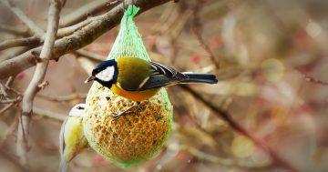Baue das beste Vogelhaus für deine gefiederten Freunde
