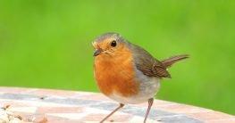 Vogelbastelhaus - Dinge, auf die du dich freuen kannst