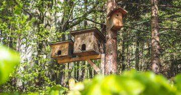 Vogelhaus Design mit vorgefertigten Bausätzen