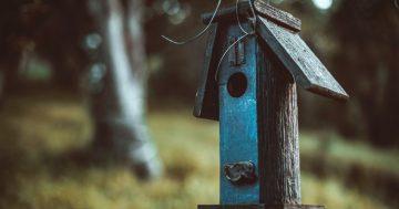 Wie man ein blaues Vogelhaus baut und auf ihre gute Seite kommt